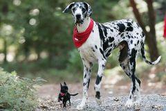 De hondenclub -